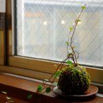 新築のリビングにオススメ!置くだけで部屋がオシャレになる植物【第37回】