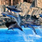 名古屋港水族館の感想|イルカを全力推し&ショーではずぶ濡れに注意!