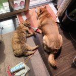 赤ちゃんとペットが一緒に暮らすこと。いじらしい犬と猫の反応【第23回】